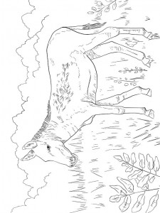 coloring page Donkeys (7)