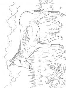 Disegno da colorare asini (7)