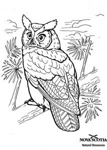 coloring page Horned owl