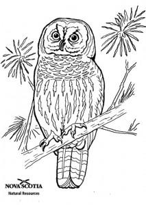 раскраска Полосатая сова