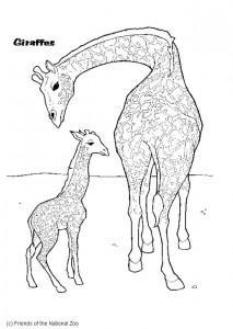 kleurplaat Giraffe (2)