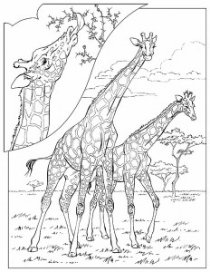 coloring page Giraffe (24)