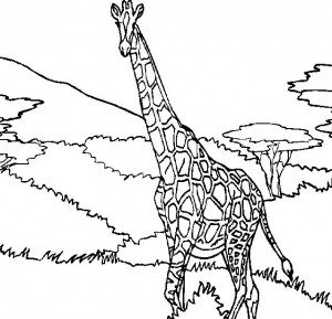 kleurplaat Giraffe (25)