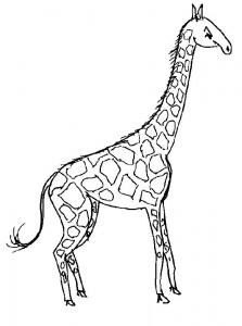 kleurplaat Giraffe (26)