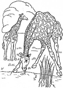 coloring page Giraffe (3)