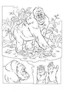 kleurplaat Gorilla