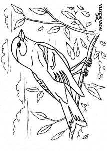 Coloriage Bouvreuil