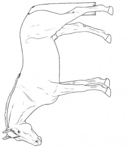 coloring page Hanoverian