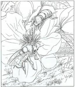 honungbi målarbok