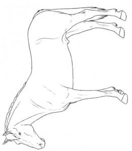 kleurplaat Iers trekpaard