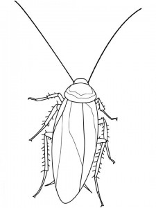 coloring page Cockroach