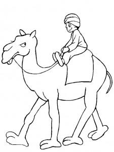 kleurplaat Kamelen (10)