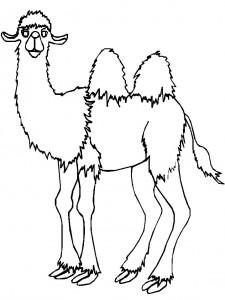 kleurplaat Kamelen (11)