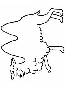 kleurplaat Kamelen (13)