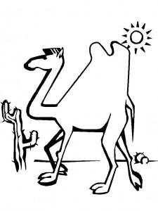 kleurplaat Kamelen (6)