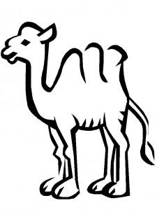 kleurplaat Kamelen (7)