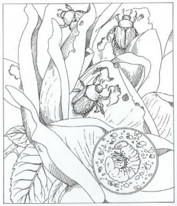 målarbok skalbaggar