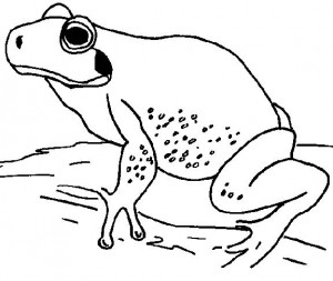 coloring page Frogs (12)