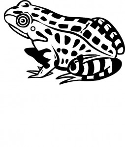coloring page Frogs (17)