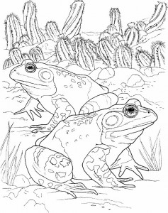 coloring page Frogs (18)