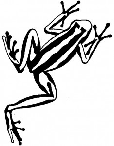 coloring page Frogs (29)