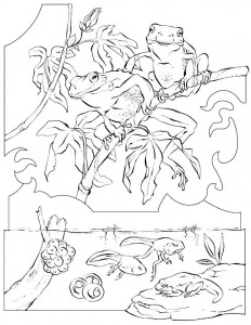 coloring page Frogs (4)