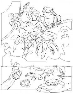 kleurplaat Kikkers (4)