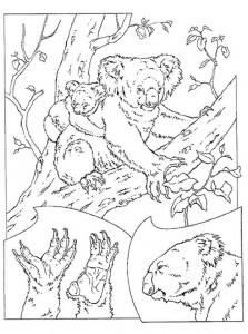 coloring page Koala bjørner (1)