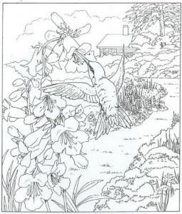 målarbok kolibri