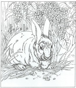coloring rabbit
