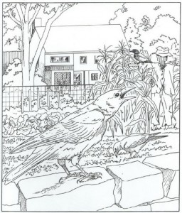 coloring page crows