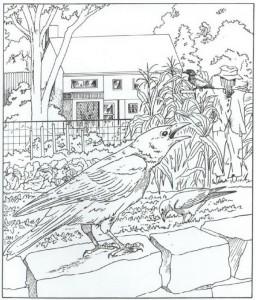 målarbok kråkor