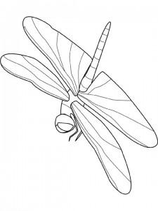 Libelle målarbok