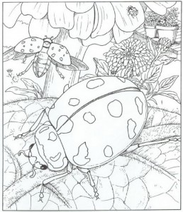 coloring ladybugs