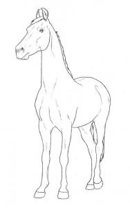 målarbok marwari sto