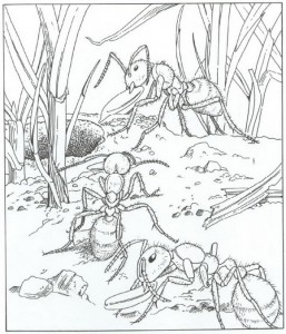 coloring ants page