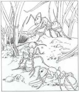 kleurplaat mieren