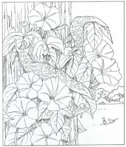 målarbok sniglar