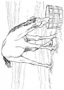 kleurplaat Paarden (1)