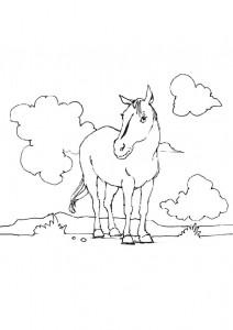 kleurplaat Paarden (19)
