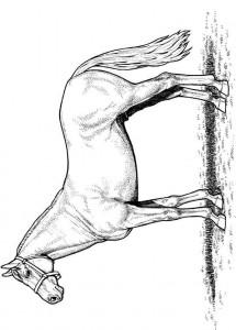 kleurplaat Paarden (2)