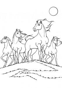 kleurplaat Paarden (20)