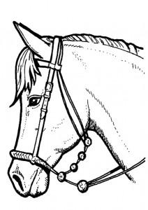 kleurplaat Paarden (21)