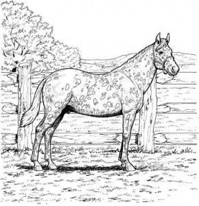 kleurplaat Paarden (3)