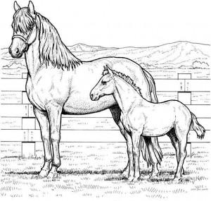 kleurplaat Paarden (4)