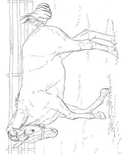 kleurplaat Paarden (5)