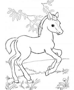 kleurplaat Paarden (8)