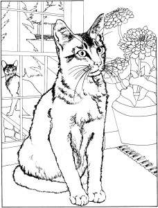kleurplaat Poezen en katten