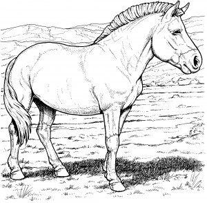 coloring page przewalskis wild horse
