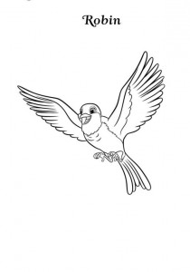 coloring page robin (1)